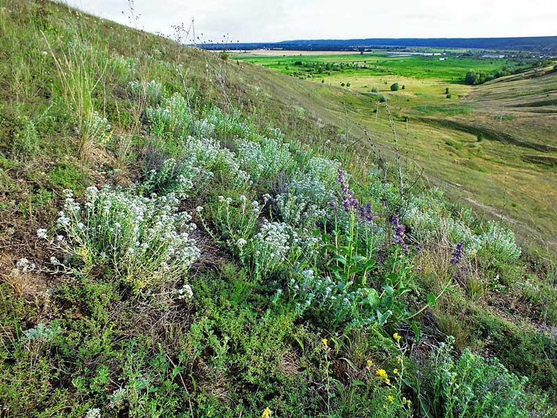 Доклад памятники природы воронежской области 9714