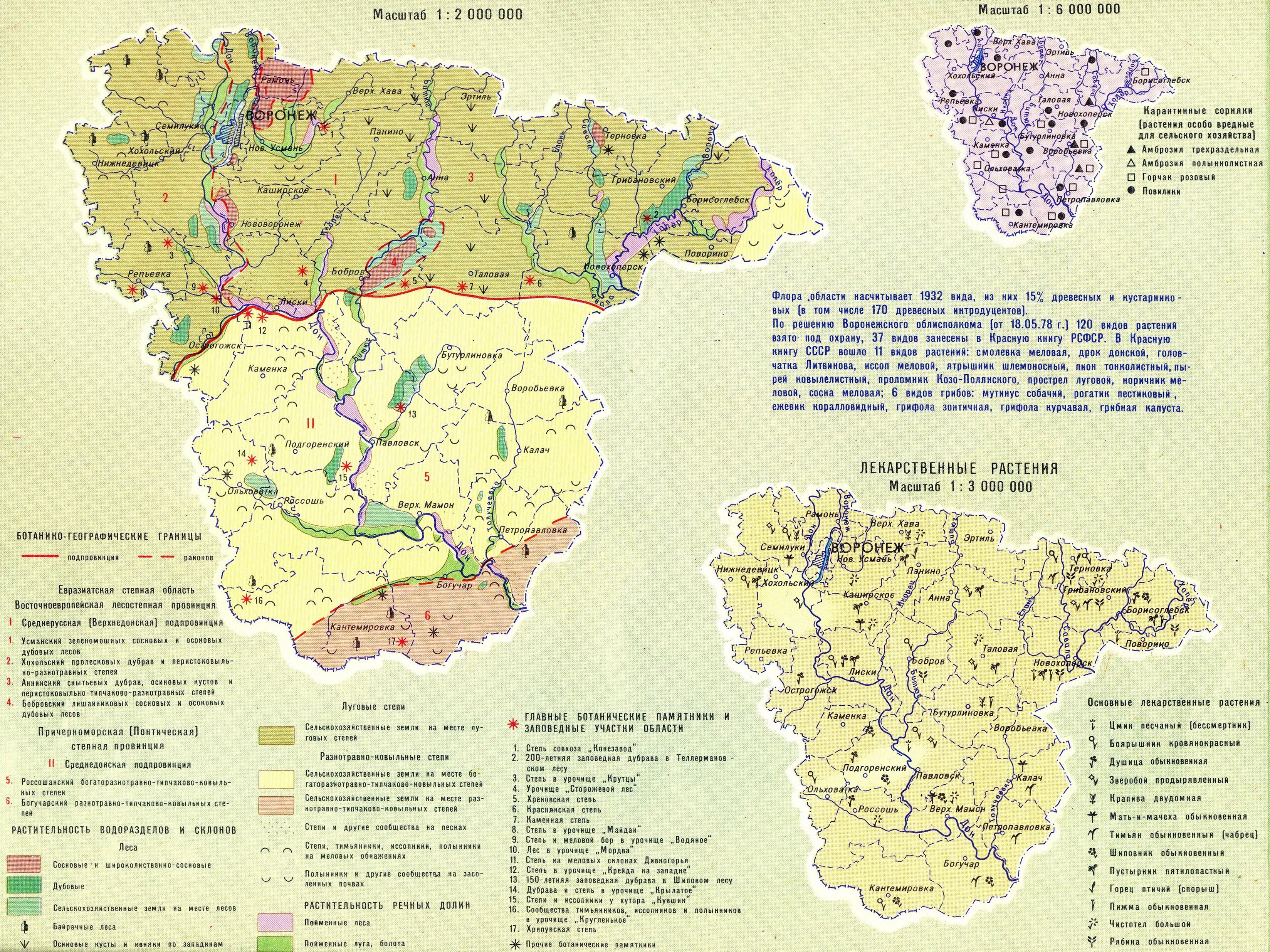 Лесные ресурсы воронежской области доклад 6785