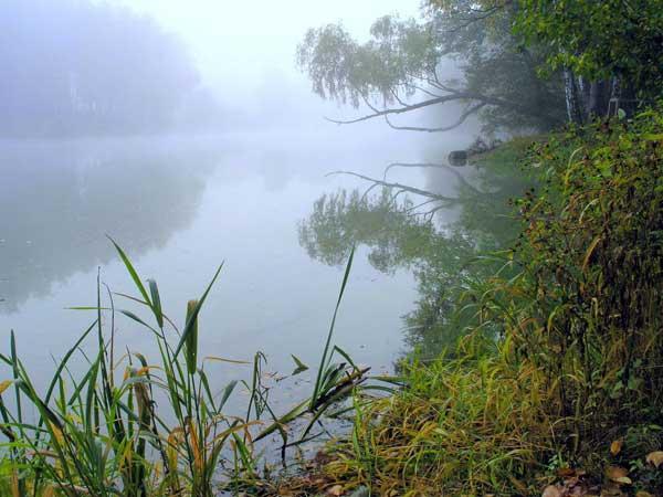 Природа Мытищинского района