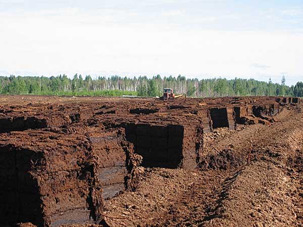 фото калининград московской области