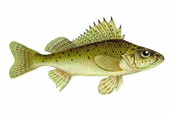 клев рыбы в воронежской области