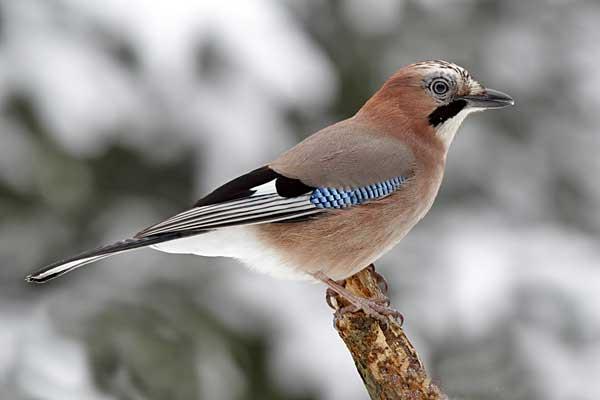пара птицы воронежской области фото с названиями как лучше поздравить