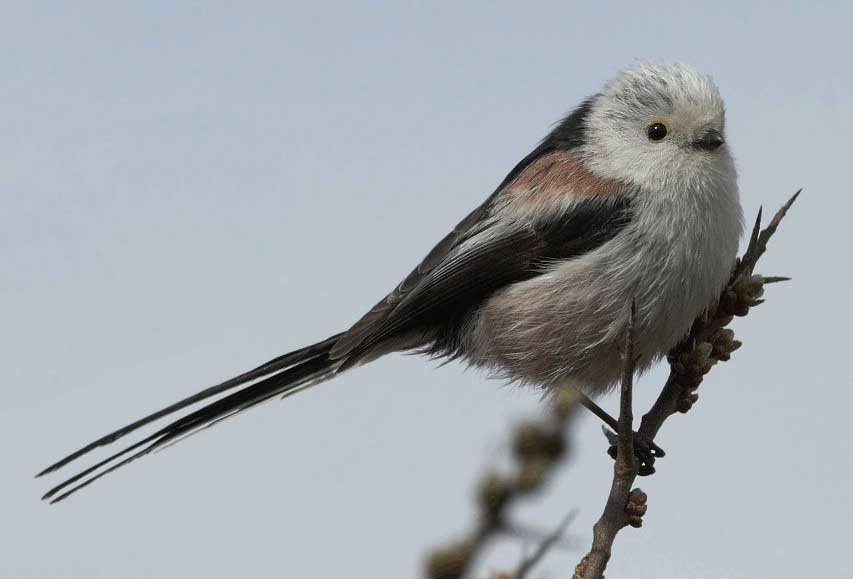 птицы курской области фото с названиями