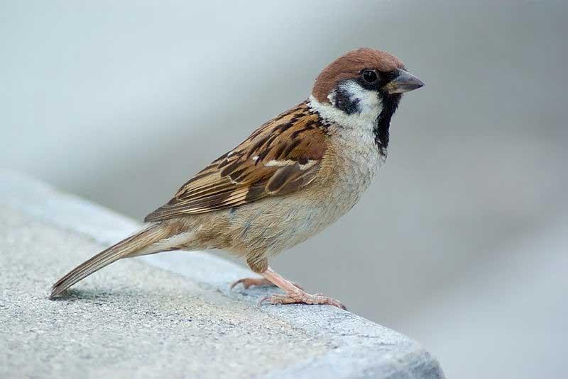 Картинки и фото зимующие птицы