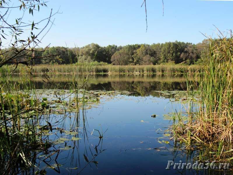 Доклад Озера пруды и водохранилища Воронежской области  Озеро в долине Хопра