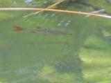 Вода так прозрачна, что можно наблюдать за жизнью ее обитателей