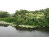 Река Икорец в нижнем течении