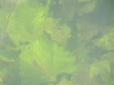 Вода Икорца очень прозрачна