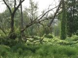 Пойма реки Икорец местами напоминает джунгли